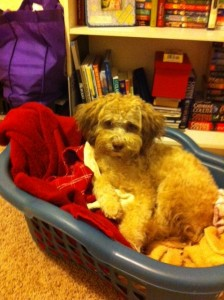 "I like to ""help"" with laundry."